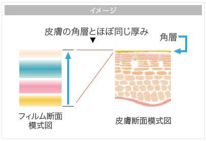 皮膚の角層の厚み